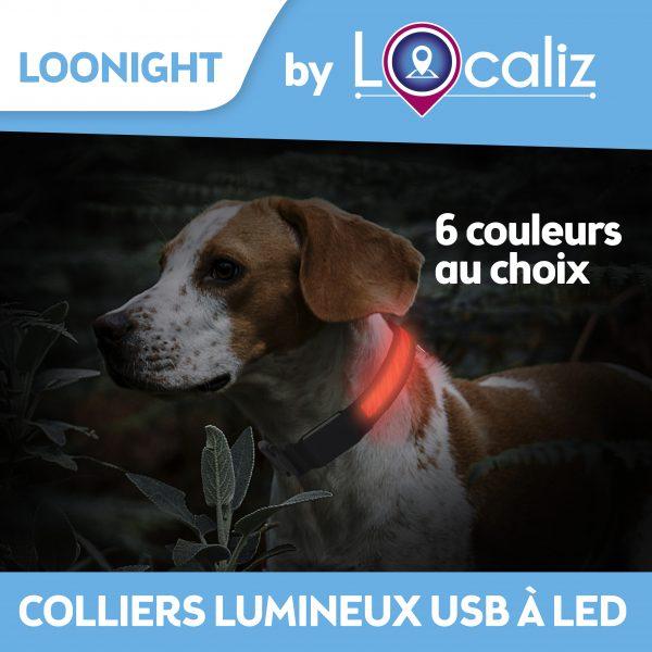 collier lumineux pour chiens