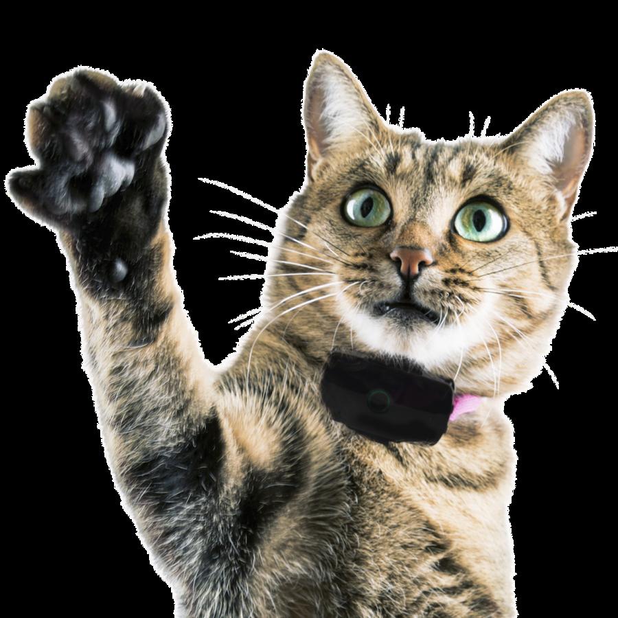 Localiz GPS la vie secrète des chats TF1